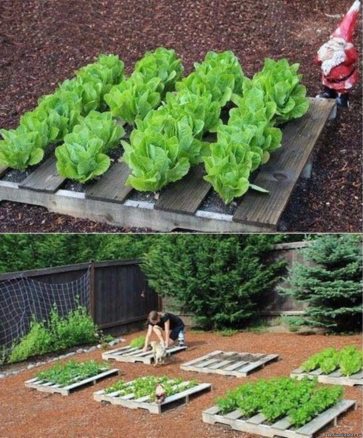 Alternative gardning: how to turn a pallet into a garden - g.